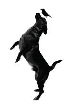 The Dog at Ki